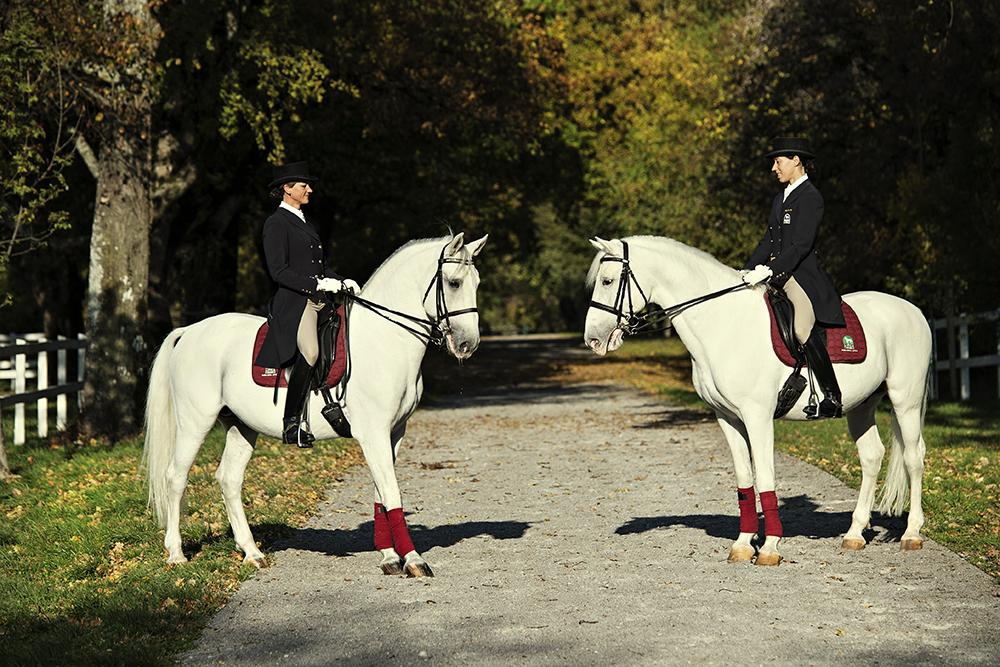 Behold Habsburg horses at the Lipica Stud farm