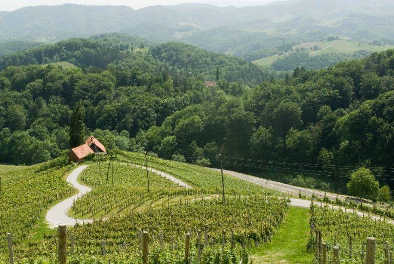 Vinska_cesta_Wine_road_Slovenia_Slovenija_Maribor_Pohorje_Bogdan_Zelnik