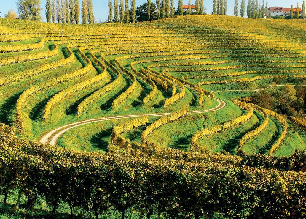 slovenia wine expirience