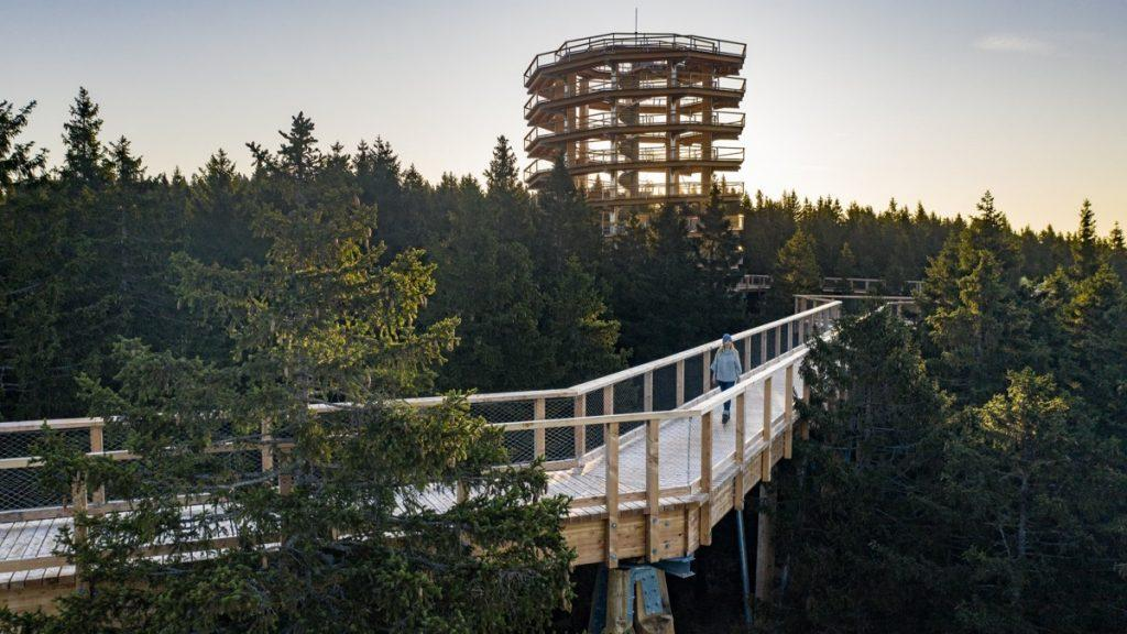 Treetop Walk on Pohorje
