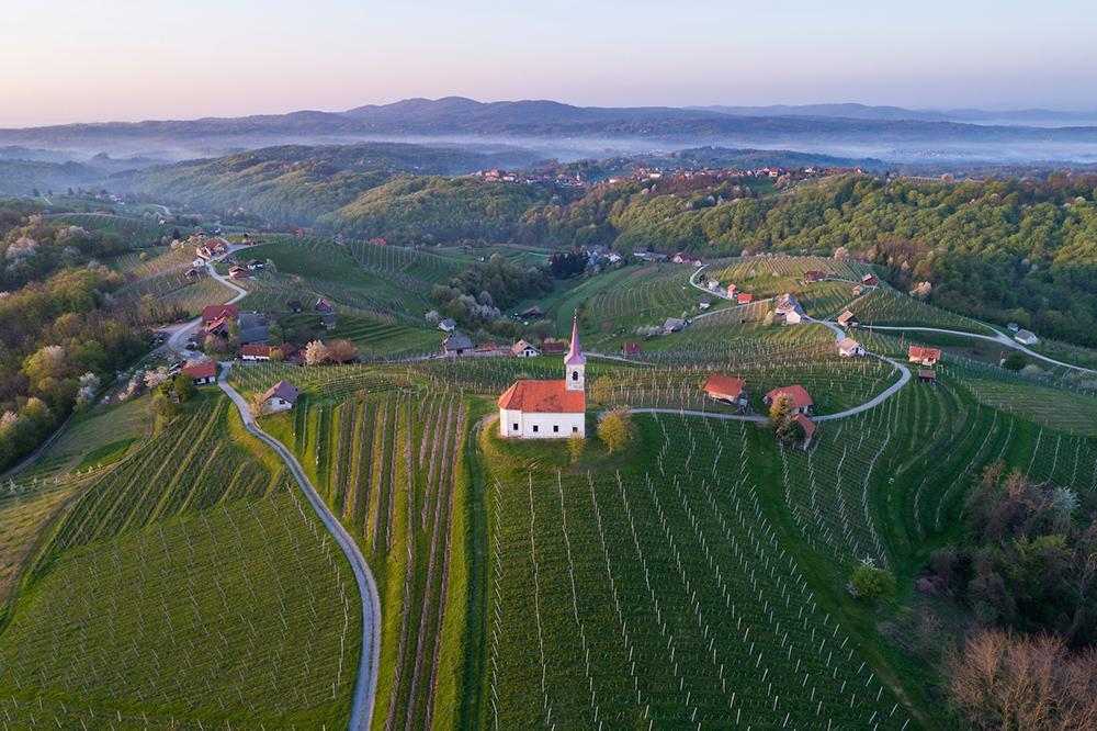 TOP Wine Experiences in Slovenia 2020