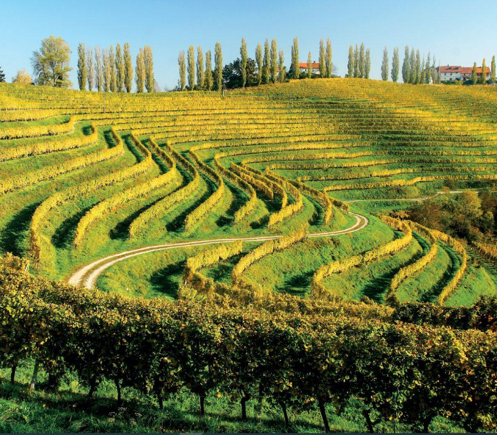 slovenia wine winery the best