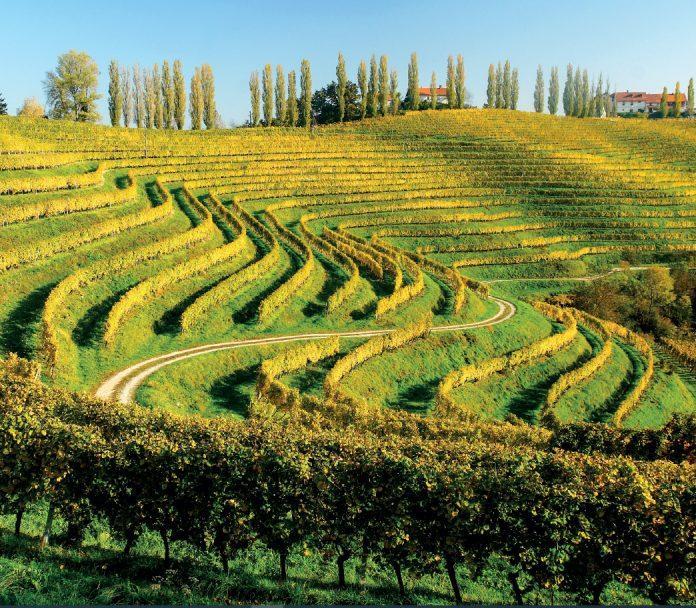 slovenia wine winery the best