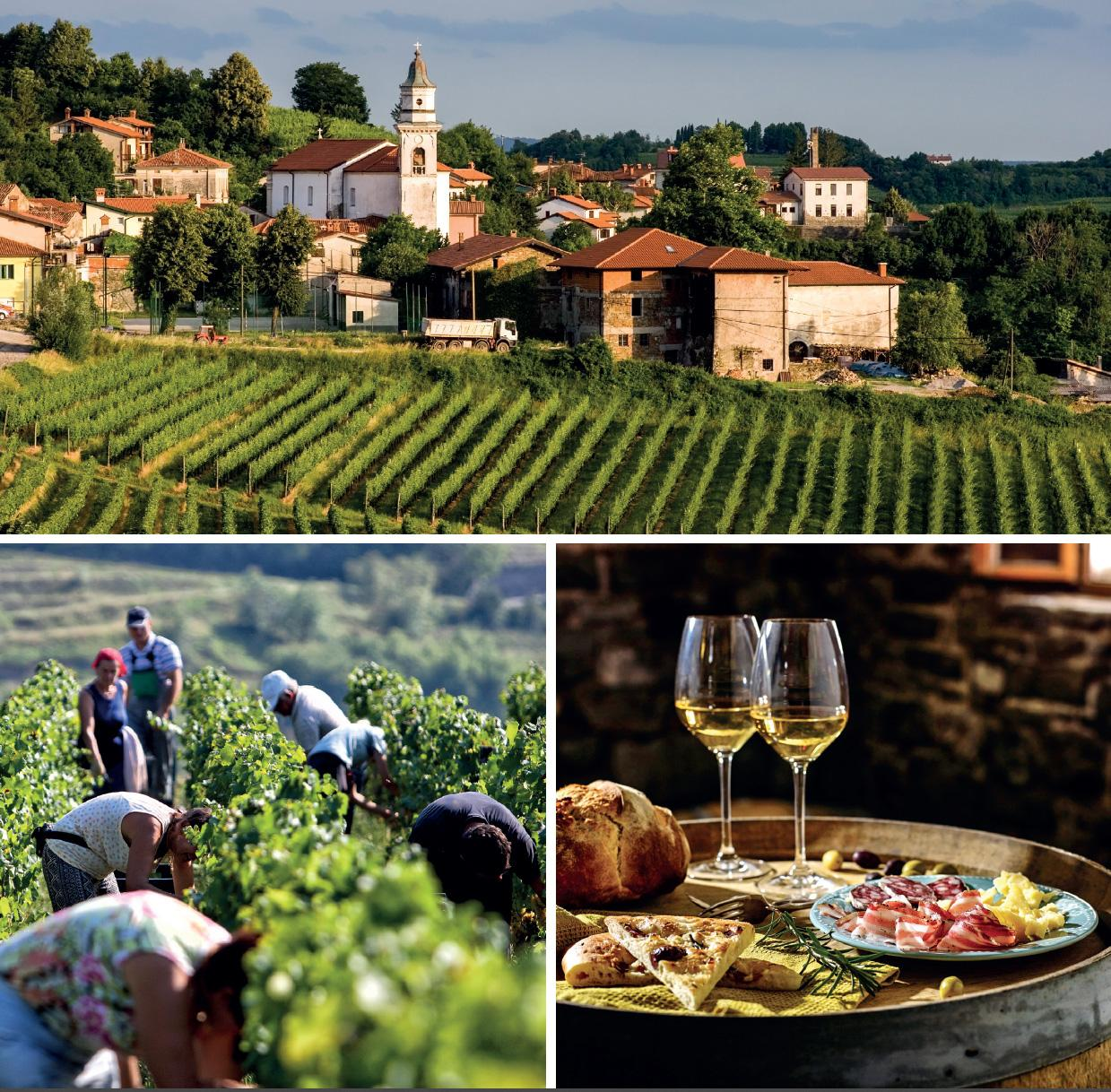 slovenian istra wine region