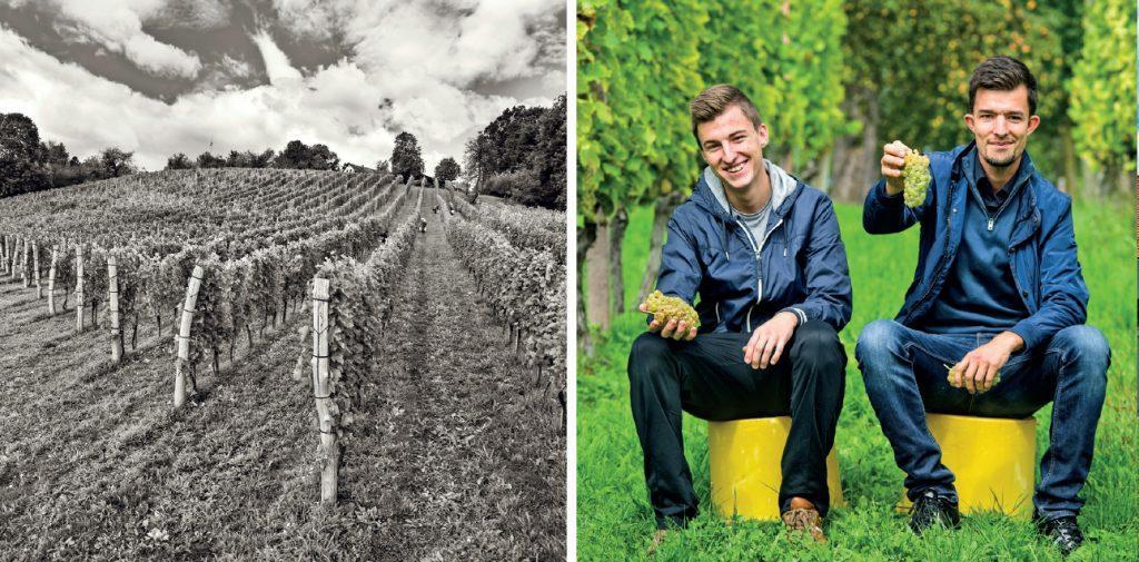 gjerkes winery
